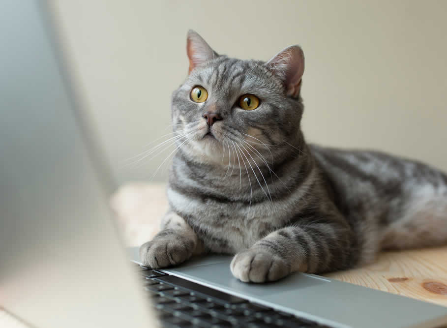 Computer Display Tips Even Your Cat Can Love